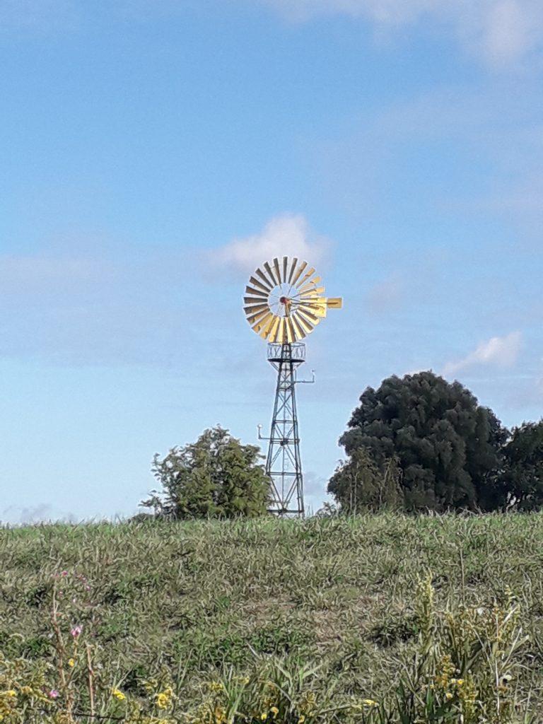 Windrad Naturschutzgebiet