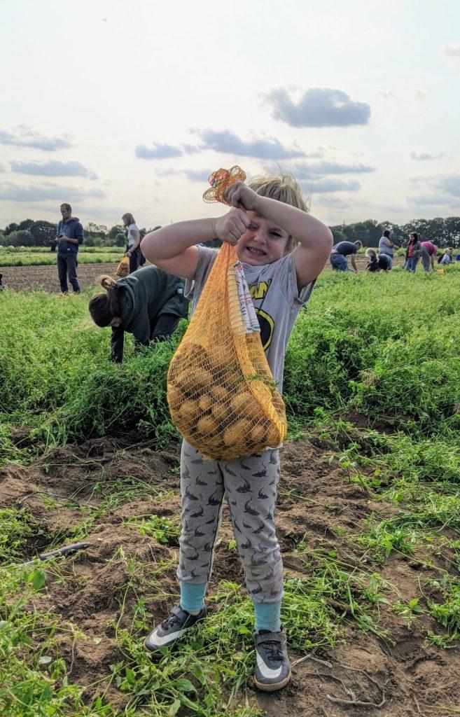 Mein jüngstes Kind hat Kartoffeln für Essen uns basteln gesammelt. Richtig schwer