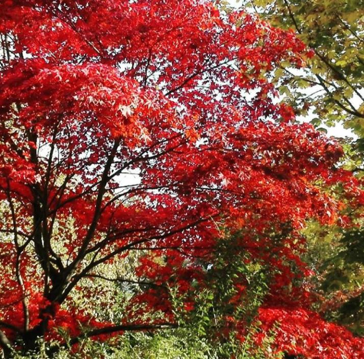 Suedostperle Herbstferien in Hamburg - Suedostperle